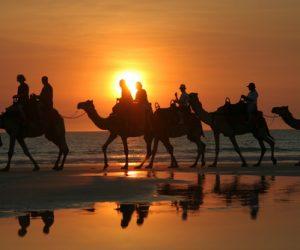 Australian immigration consultants in Saudi Arabia